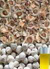 BIJI KELOR (Moringa oleifera) SUMBER ALTERNATIF BAHAN BAKAR BERKELANJUTAN