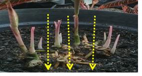 Mempersiapkan Bahan Tanam-Bibit (#Bagian-2. Bercocok Tanam Tanaman Hias Dalam Pot)