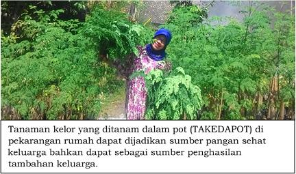 Ini Manfaat Pohon Kelor